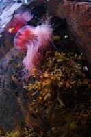 Третий Международный Чемпионат по подводной фотографии на «Кубок Белого моря»