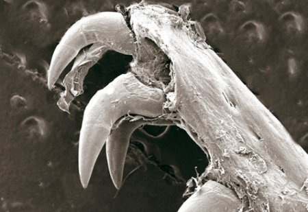 Как кусает мурена?